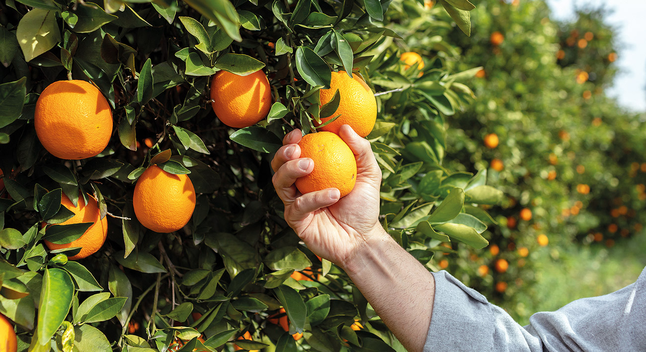 Vom Applaudierer zum Orangenpflücker
