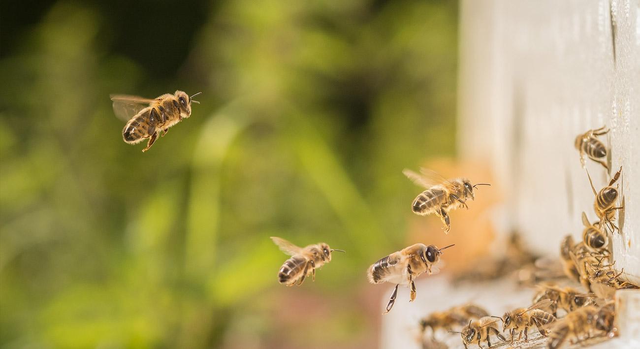 Von Bienen, Honig und eigenen Unternehmen